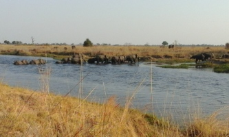 Elephants crossing into Botswana from Caprivi Strip