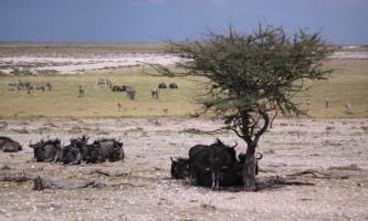 Group of animals in Etosha National Park,  Northern Namibia