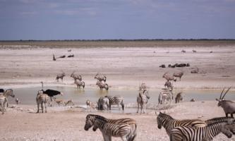 Variety of animals in Etosha National Park,  Northern Namibia