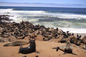 Cape Cross Seal Colony, Atlantic Ocean, Western  Namibia